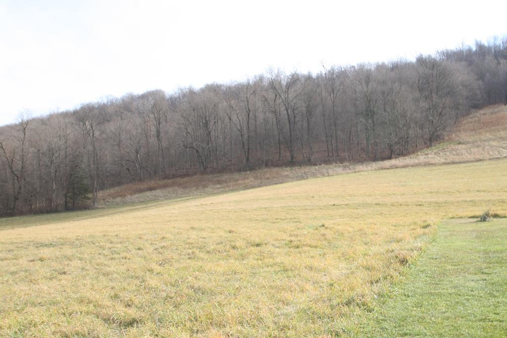 Field and Wooded Area